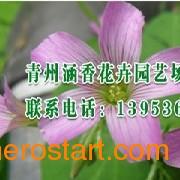 山东省专业的时令草花设备feflaewafe