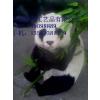 供应四川国宝大熊猫