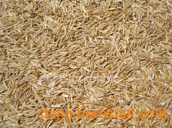 牧草种子价格黑牧草种子供应黑牧草种植技术管理