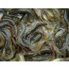 供应是否想知道养殖泥鳅的前景如何?