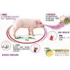 供应使用生猪口蹄疫疫苗要注意的内容