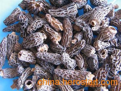 供应大量茶树菇 羊肚菇 花菇 牛肚菇 姬松菇批发