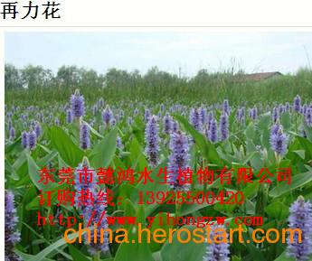 供应中山水生花卉,优选懿鸿植物品牌,值得信赖!