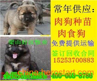 供应河北石家庄鹿泉县哪里有肉狗养殖场