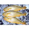 供应冷冻石斑鱼批发雪鱼片厂家最低采购价格代理加盟