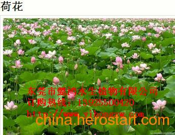 供应普洱水生花卉,推荐懿鸿植物品牌