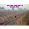 供应蔬菜大棚建设郑州哪家最专业 价格最合理
