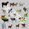 供应宠物马的养殖视频哪里有小尾寒羊2013利木赞牛价格