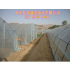供应简易蔬菜大棚 钢架拱棚朔料大棚建设公司郑州