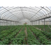 供应温室大棚搭建国家非常重视的一项农业技术?