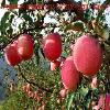 华夏田园农产品销售公司-最知名的玛咖养生酒厂商|保健养生代理