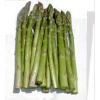 长期供应进口芦笋种子-蒙德欧芦笋种子--各种芦笋种子