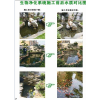 供应成都锦鲤鱼池水变绿变黑的专业解决办法?