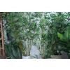 供应高仿真竹子隔断客厅装饰竹子盆景 假竹子竹林造景 厂家直供仿真竹
