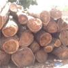 供应进口原木板材