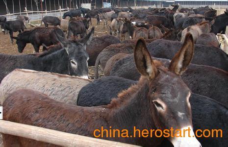 供应湖北省肉驴养殖前景,肉驴养殖技术书