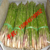 供应芦笋种子 紫芦笋种苗 石刁柏种子 抗癌蔬菜 芦笋茶 芦笋罐头