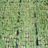 山东哪家培育瓜类种苗价格最低?都有哪些培育,盘点下feflaewafe