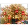 供应厂家直销批发大型仿真许愿树假树广场公园装饰树