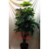 供应家居办公室装饰仿真招财树 人造假树假盆栽盆景