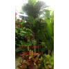 供应厂家直销仿真三杆椰子树 人造假树室内外装饰仿真树