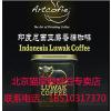 供应麝香猫屎咖啡、纯进口猫屎咖啡专卖店、北京猫屎咖啡专卖店、