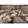供应食用菌-香菇