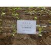 供应西红柿迷宫滴灌带、批发Φ16迷宫滴灌带(图)