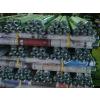 供应低价滚筒,深圳无动力滚筒伸缩线