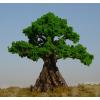 供应室外景观工艺模型树