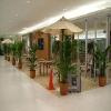 【羊年推荐】高新区办公盆栽租摆|高新区办公花卉租赁|值得信赖