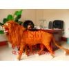 供应大型动物模型制作 仿真狮子真皮毛制作 照相器材展示用品