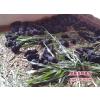 供应湖南黑豚价格农村创业投资项目黑豚组合养殖