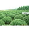 供应农用物资 化肥