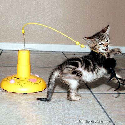 供应飞行鼠-国内高端宠物玩具