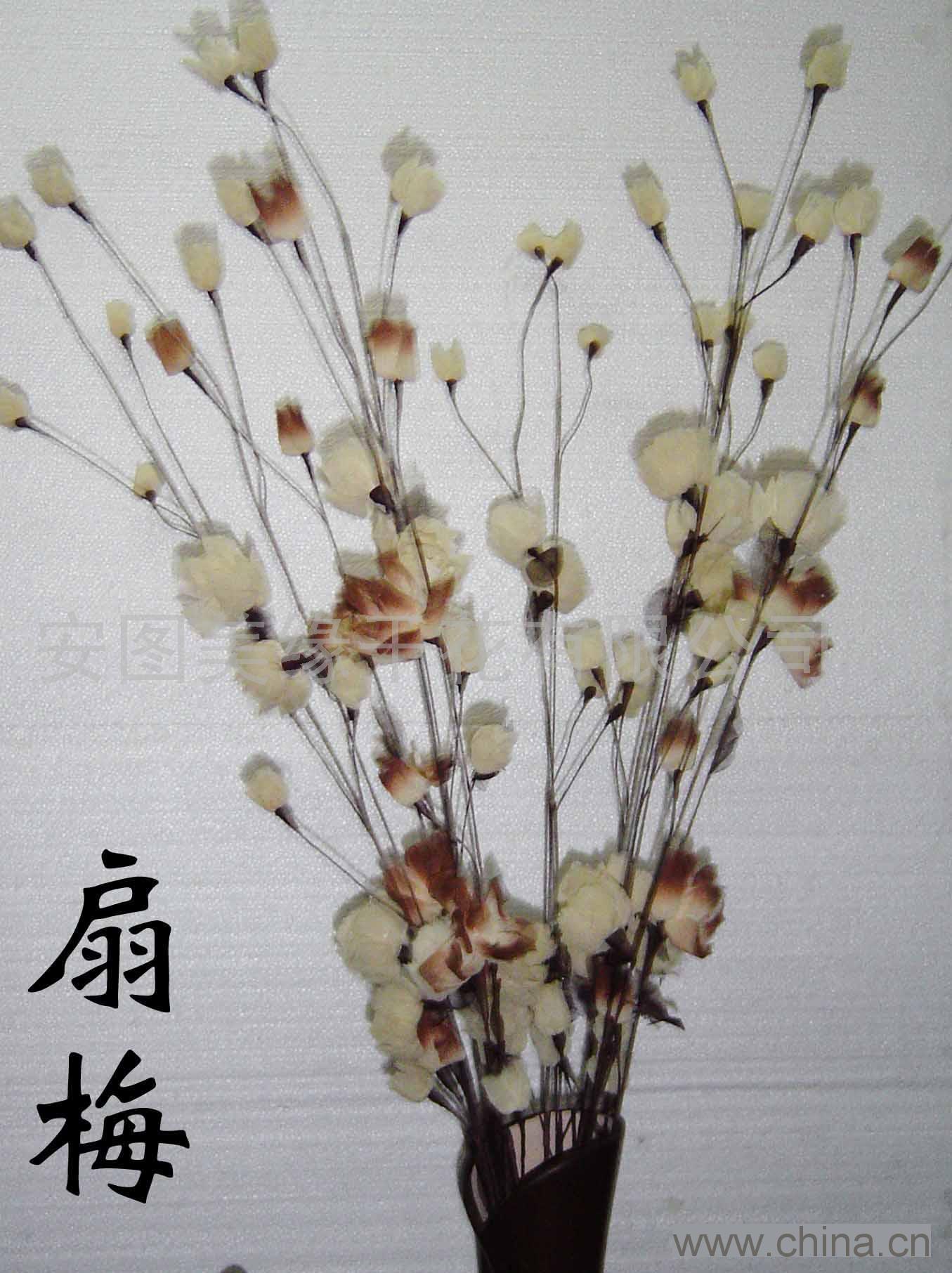 干花(扇梅)
