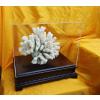 供应珊瑚陈列、展示用木底座配透明防尘盒