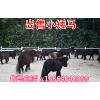 供应矮马的价格  矮马的养殖场