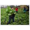 供应扬州农业生态旅游 苏州农业生态旅游 仪征农业生态旅 企业行