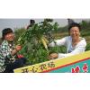 供应生态农业旅游平台 扬州生态农业游网 绿色农业生态游 企业行
