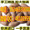 供应千眼菩提超大极品霸王果12|13|14cm