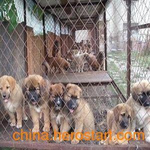 供应新乡永兴养殖厂提供肉狗苗,肉狗养殖服务