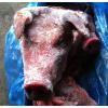 供应批发丹麦皇冠猪头 加拿大484猪皮