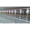 厂家供应养猪设备 母猪产床 自动料线