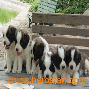 供应肉狗养殖技术与肉狗养殖场的建立 永兴