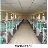 甘肃自动喂料,青海畜牧器械设备,西宁养殖专用空调
