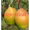 供应陕西红香酥梨价格