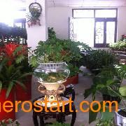 徐州水培花卉加盟 河北水培花卉技术培训火爆不停