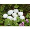 供应荆江土鸡蛋,土鸡蛋市场价格,哪里有卖土鸡蛋的