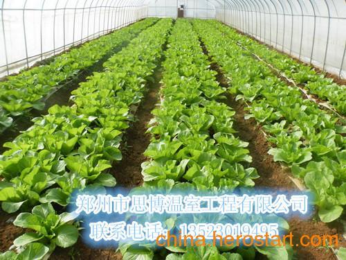 供应长治山西全钢架蔬菜大棚建设价格